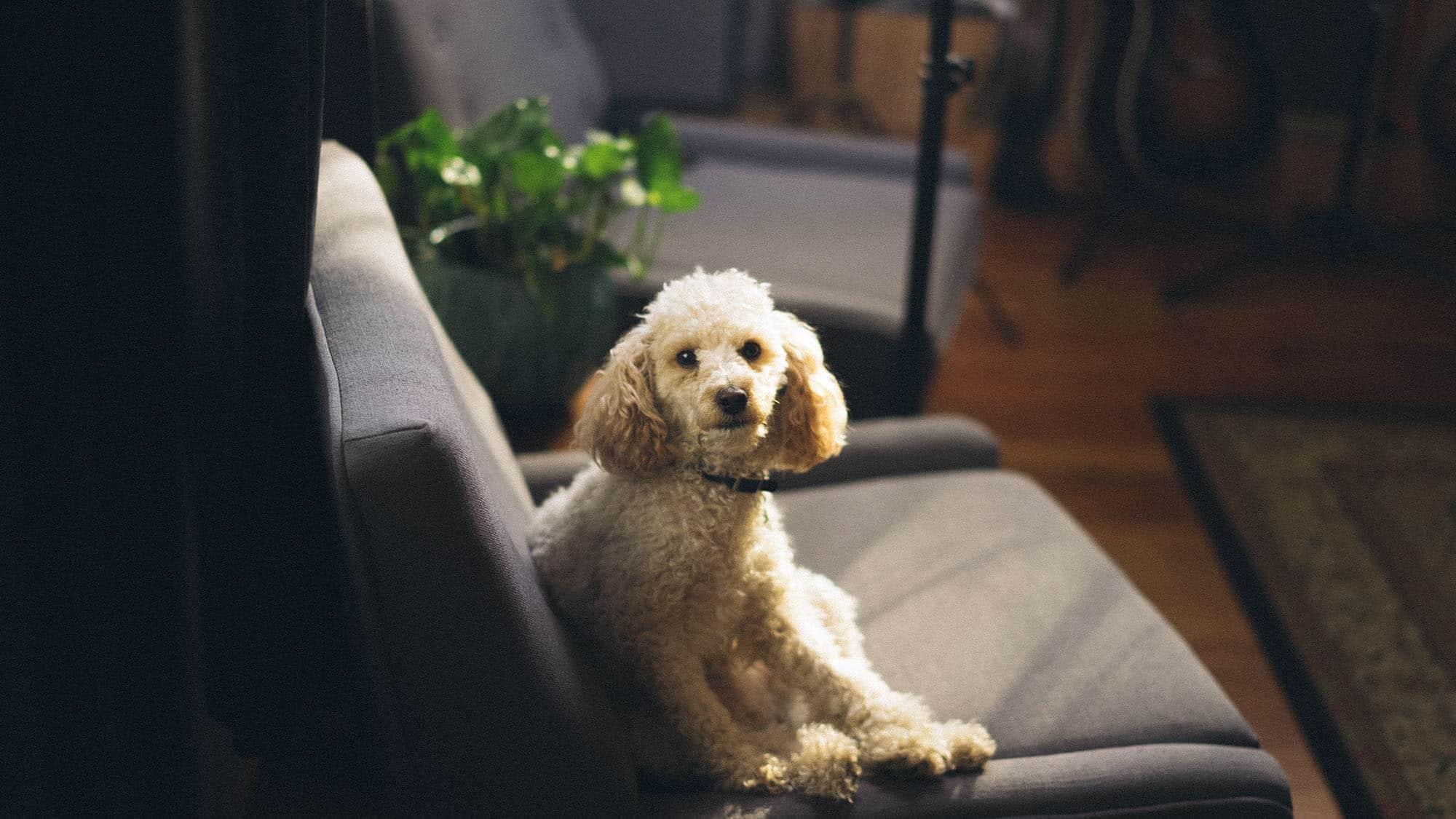 CyberPet - Best cheap dog beds