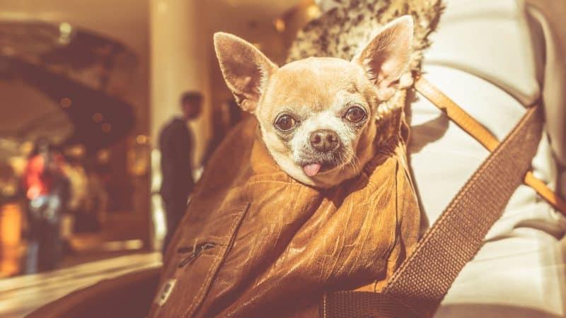 CyberPet - Best dog backpack carrier
