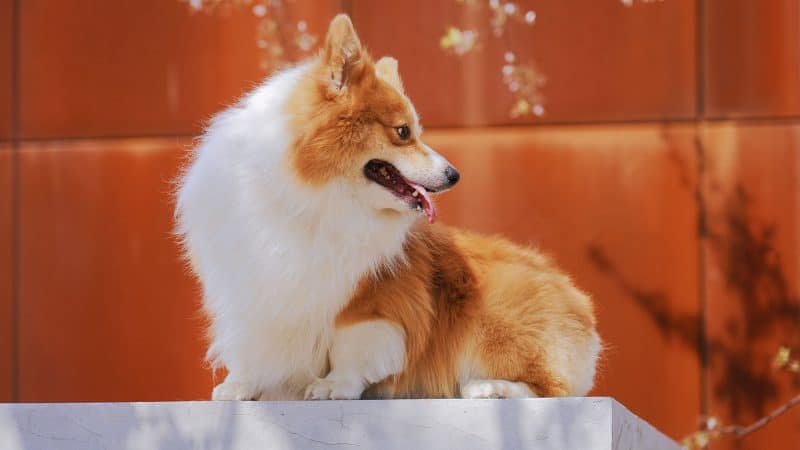 Top 5 Best Dog Foods For Shedding And Coat Health