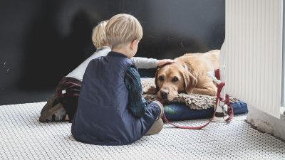 5 Best Large Dog Beds to Treat Your Big Baby Better in 2019