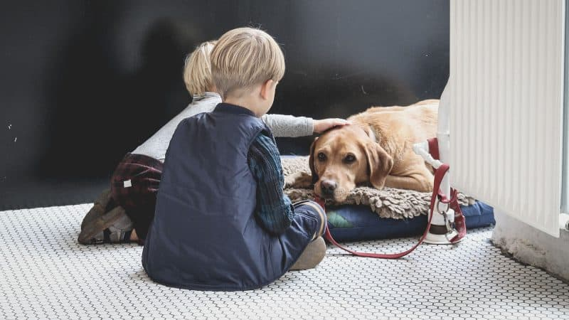 5 Best Large Dog Beds To Treat Your Big Baby Better