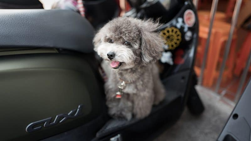 5 Best Travel Dog Crates To Take Your Dog On Trips