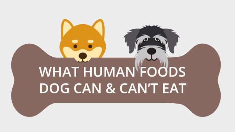 50+ Human Food Your Dogs Can And Can Not Eat