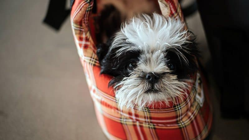 5 Best Dog Carriers To Keep Your Small Dog By Your Side