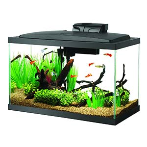 5 Best 10 Gallon Fish Tanks for Beginners and Experts 2019