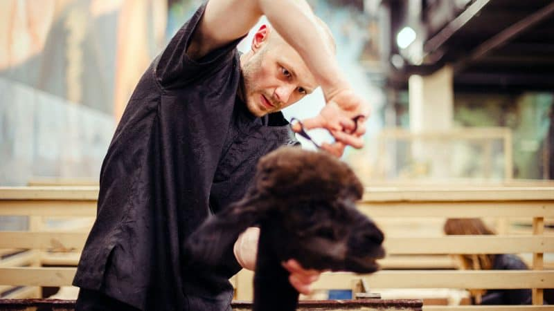 5 Best Dog Clippers For Grooming Your Dog At Home