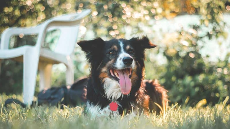 8 Best Dog Foods You Should Be Feeding Your Dog