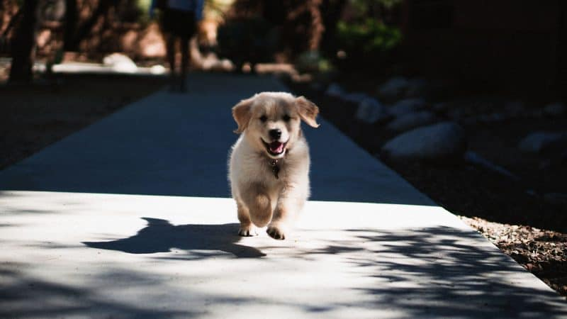6 Best Puppy Foods For Your New Best Friend