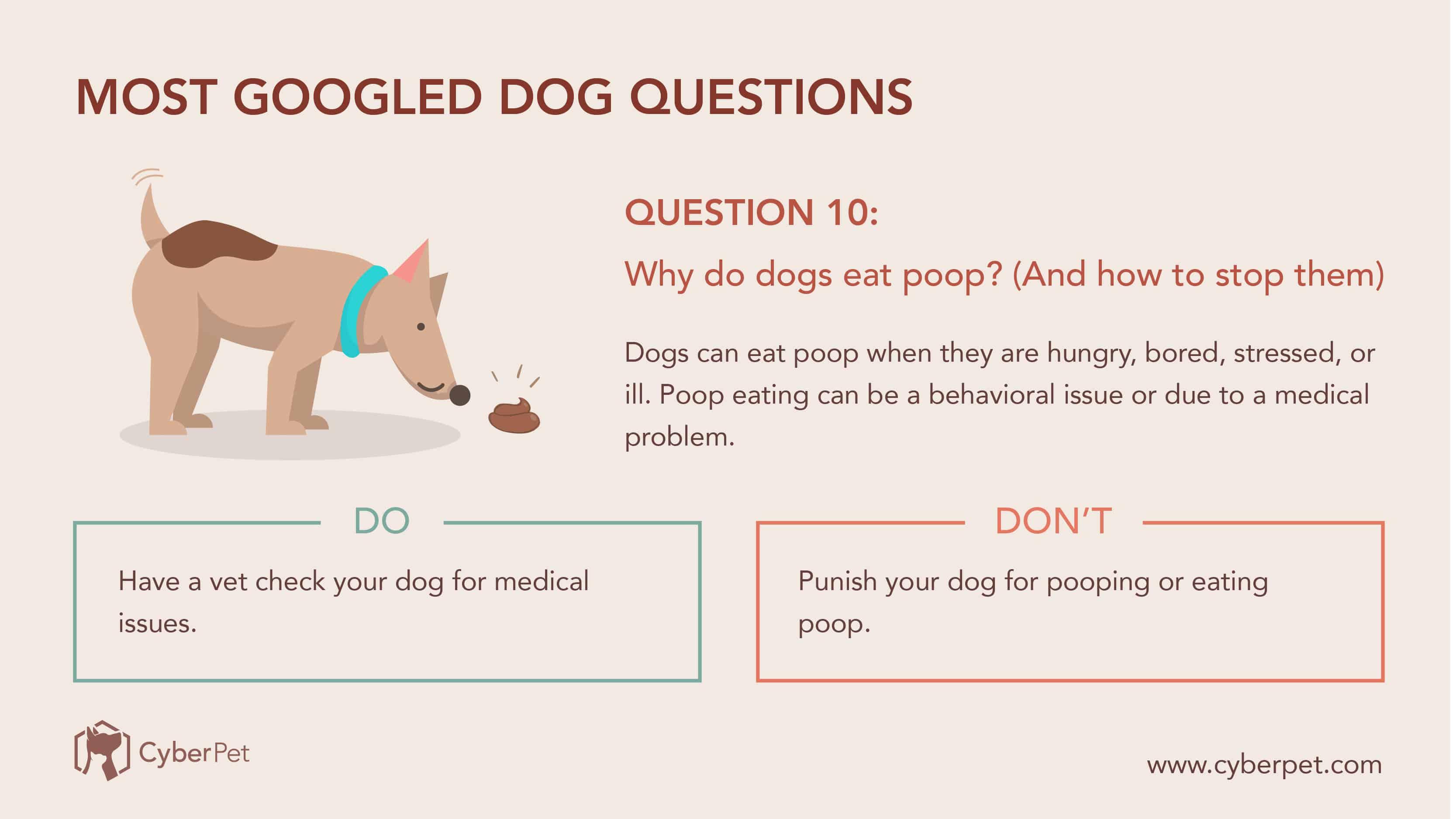 10 Most-Googled Dog Questions - Q10