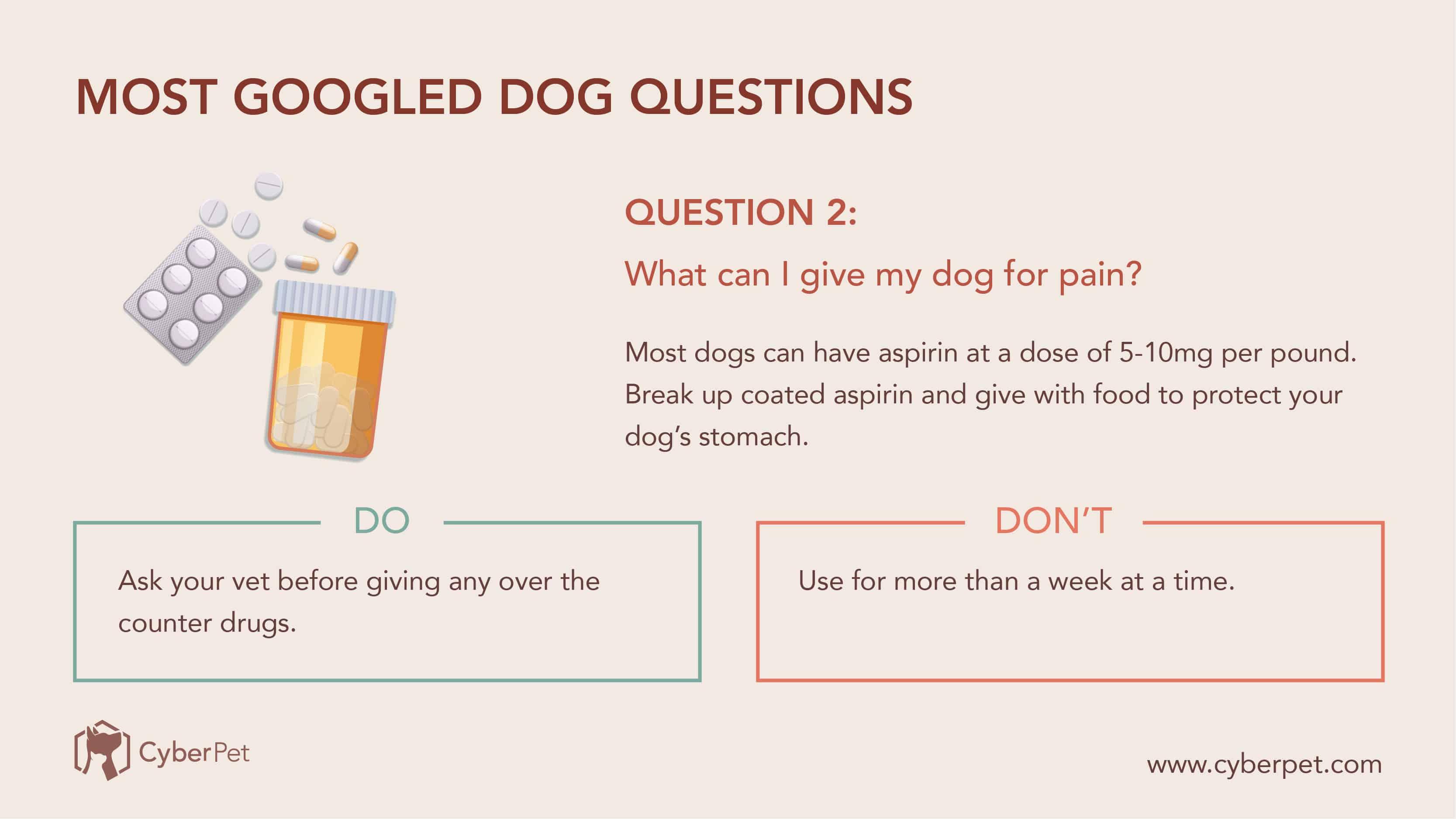 10 Most-Googled Dog Questions - Q2
