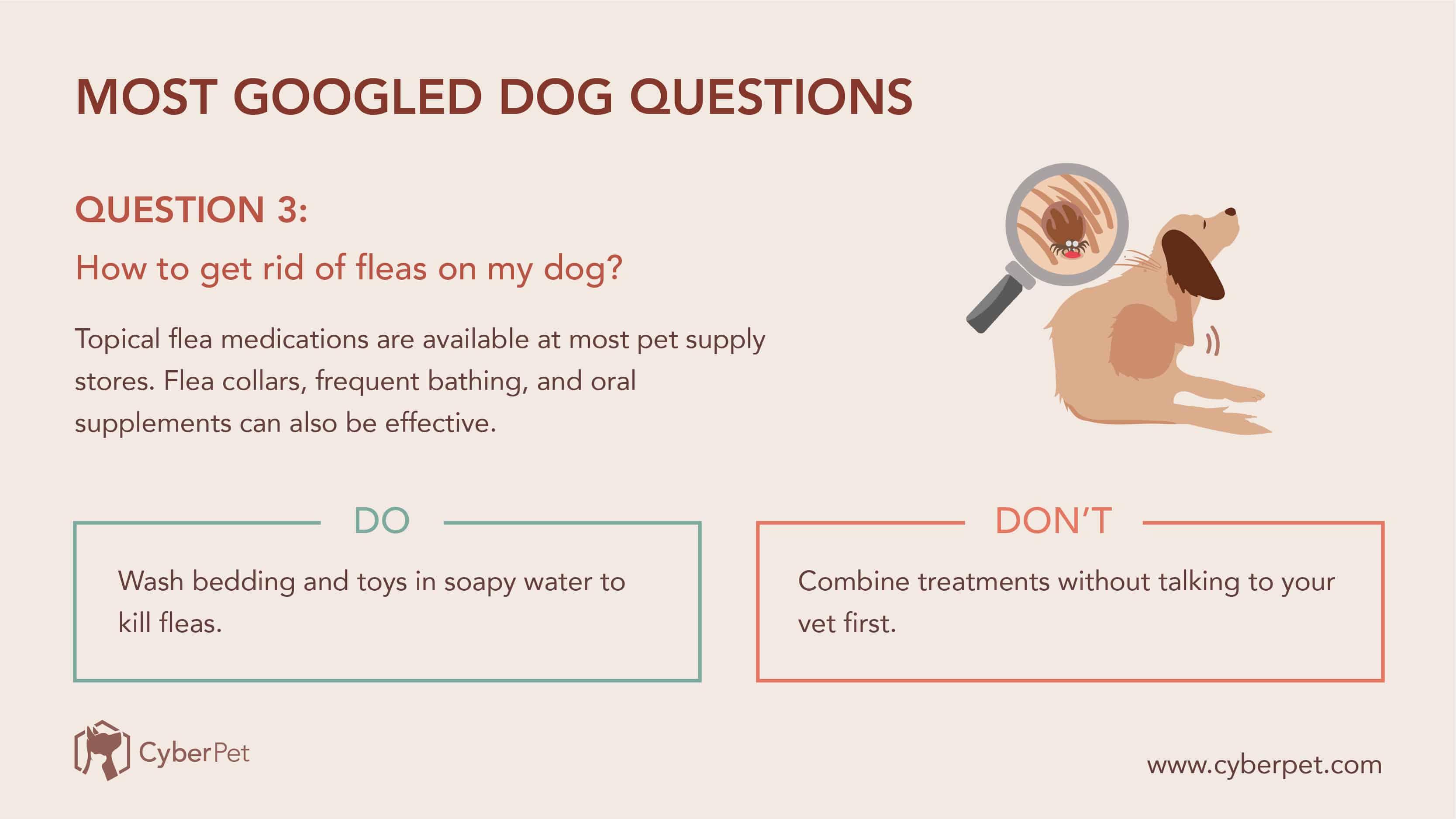 10 Most-Googled Dog Questions - Q3