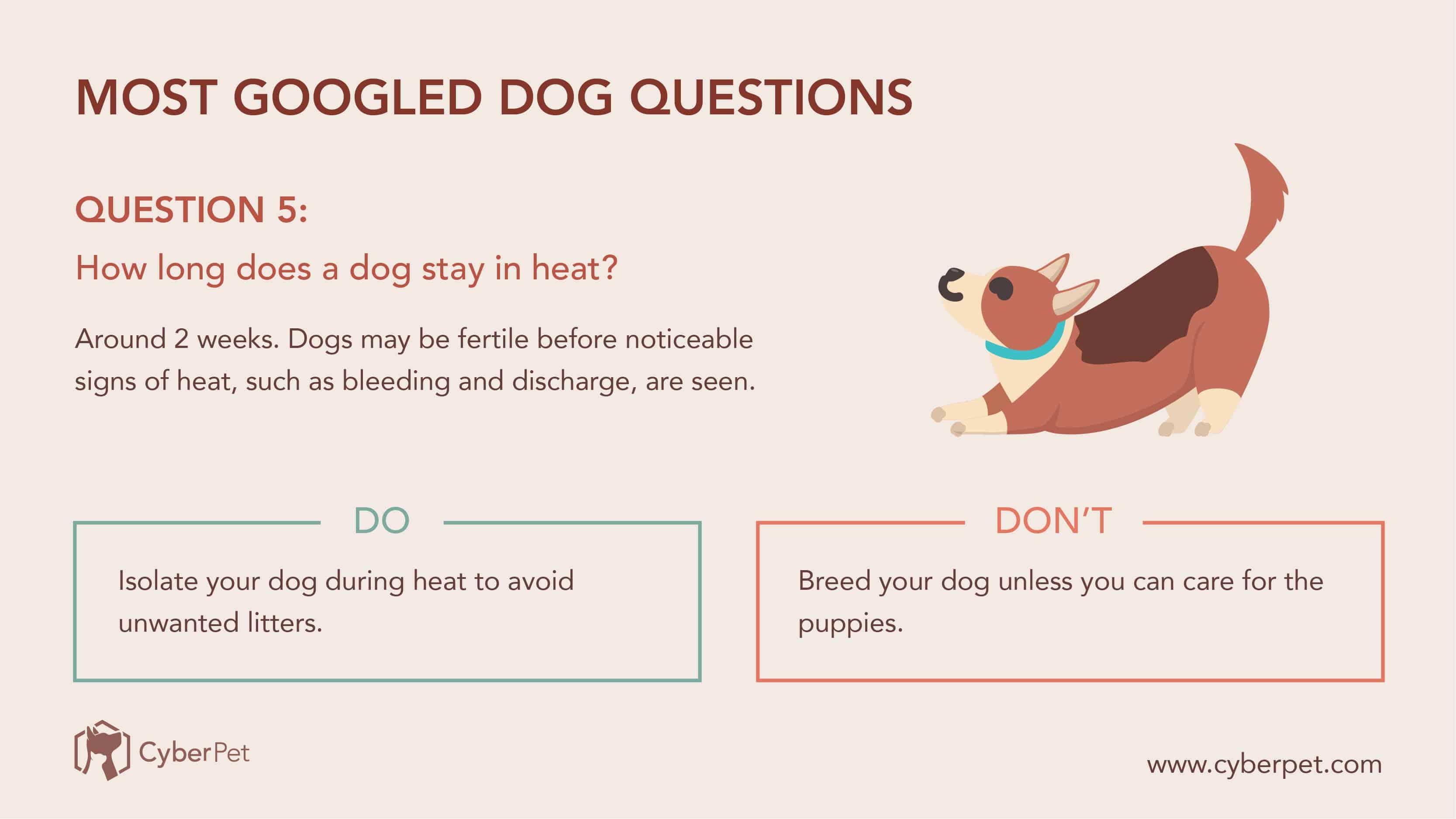10 Most-Googled Dog Questions - Q5