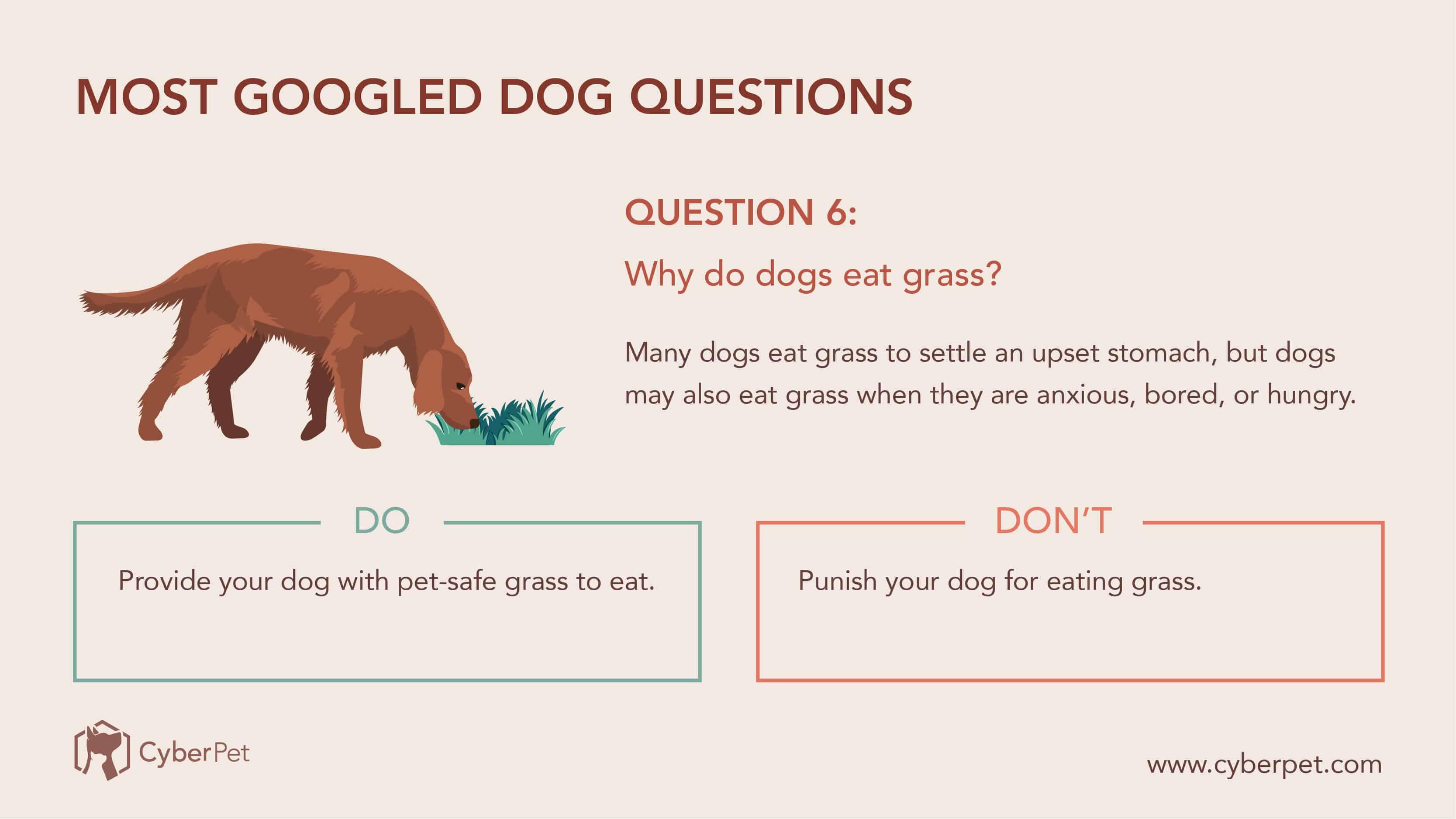 10 Most-Googled Dog Questions - Q6