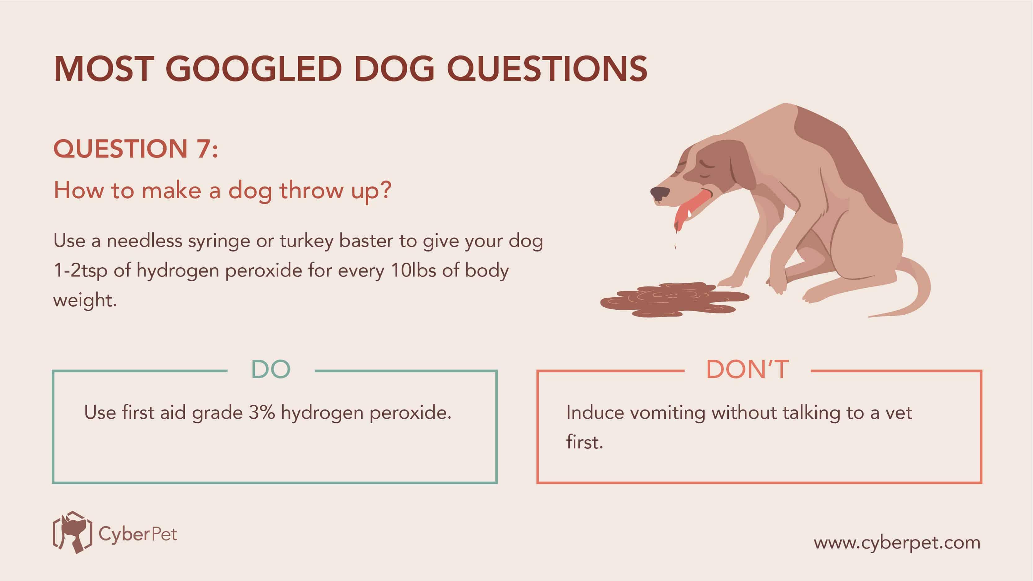10 Most-Googled Dog Questions - Q7