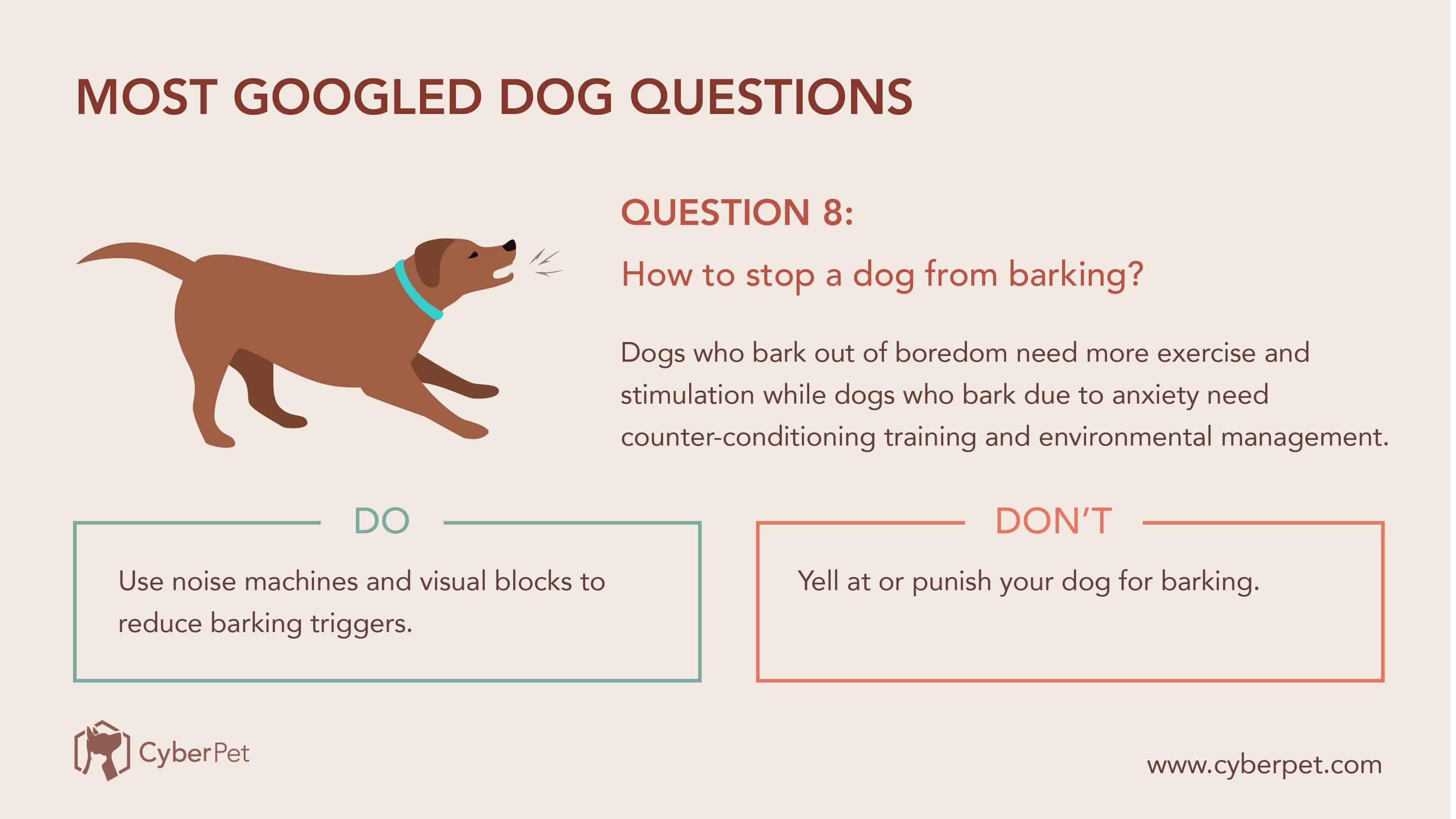 10 Most-Googled Dog Questions - Q8