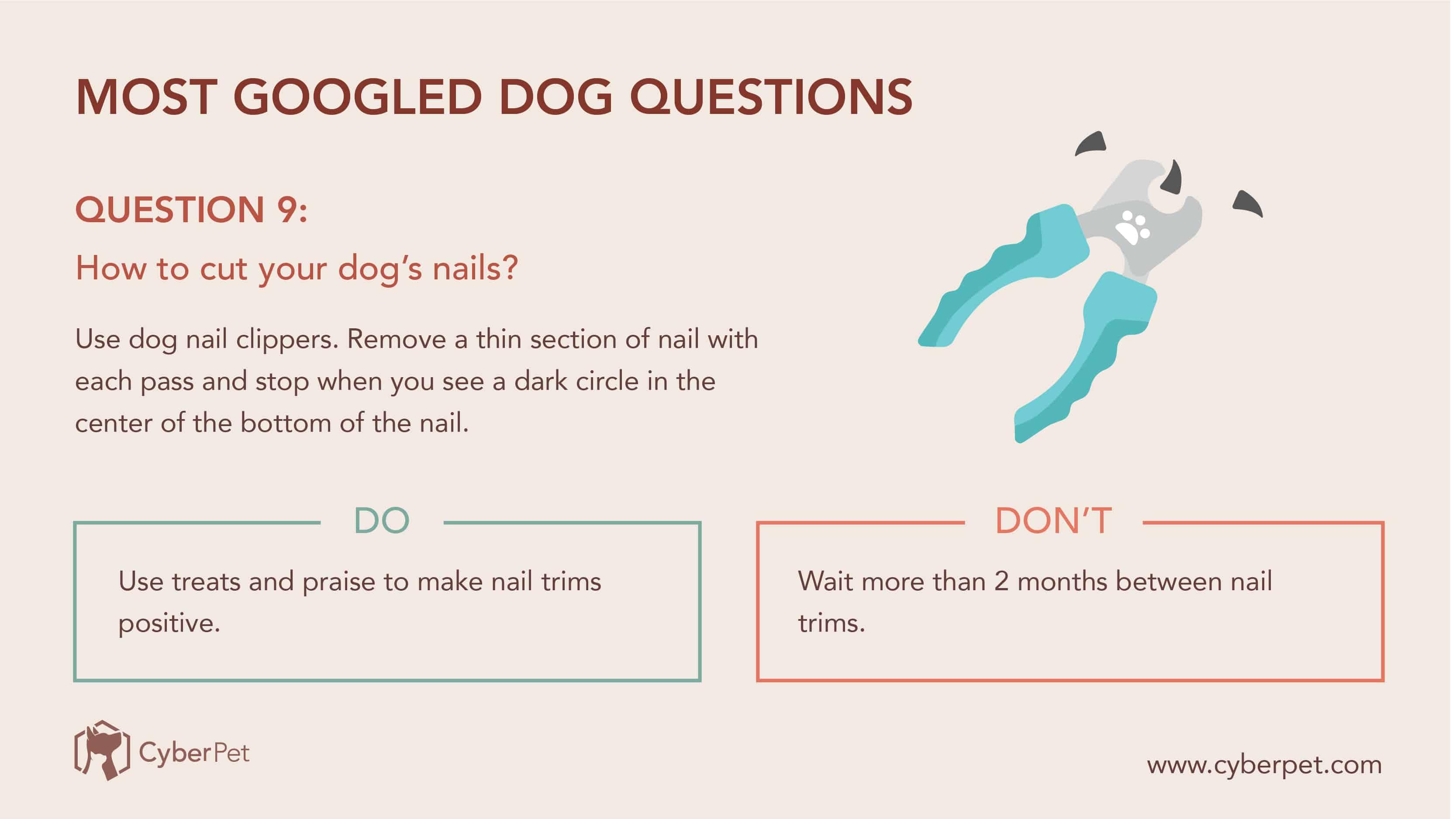 10 Most-Googled Dog Questions - Q9