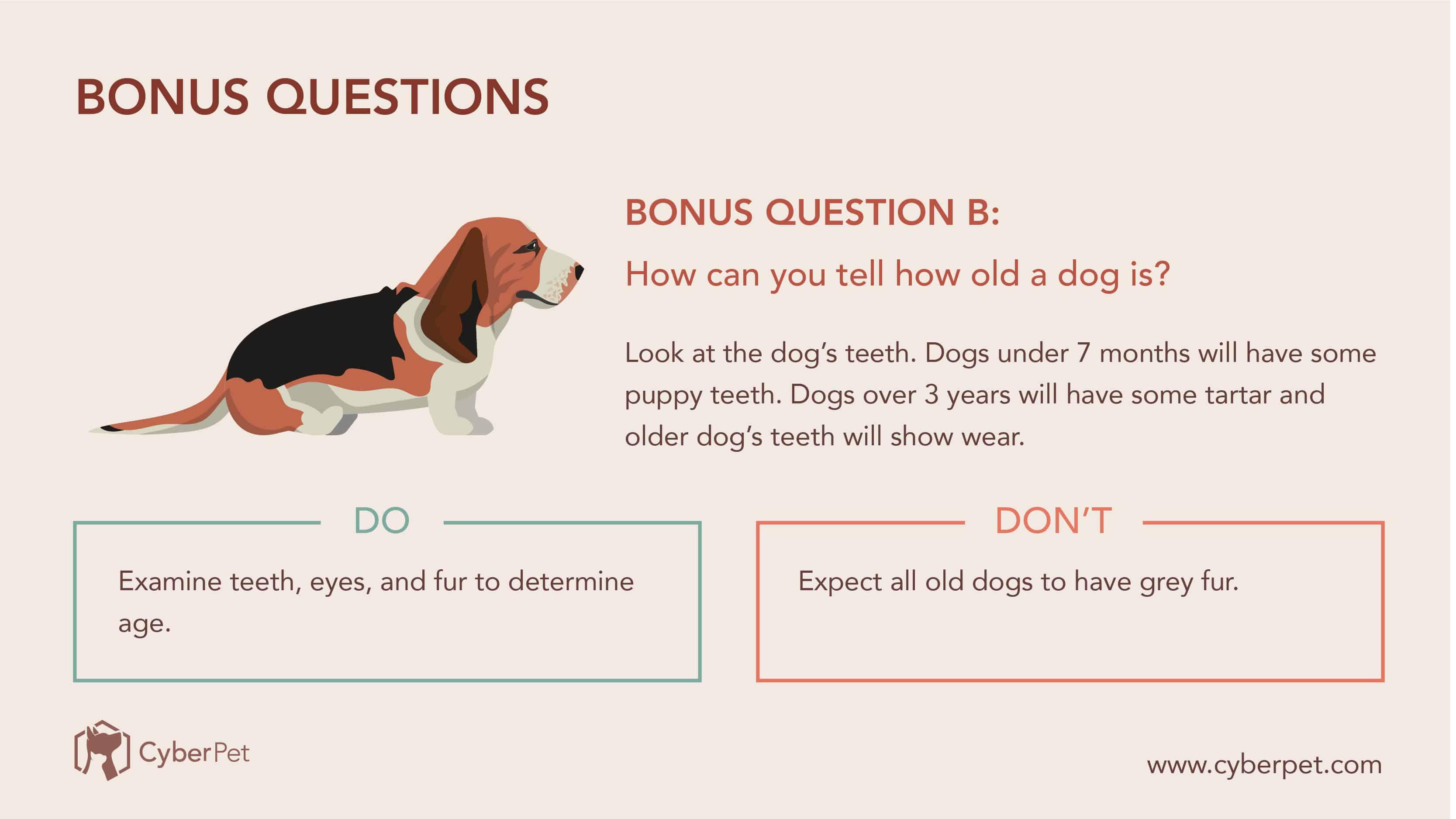10 Most-Googled Dog Questions - QB