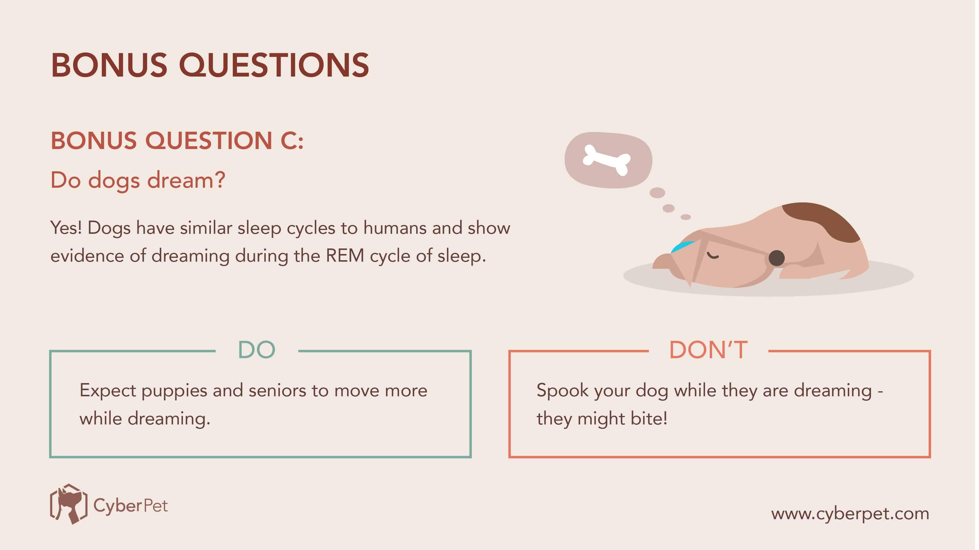 10 Most-Googled Dog Questions - QC