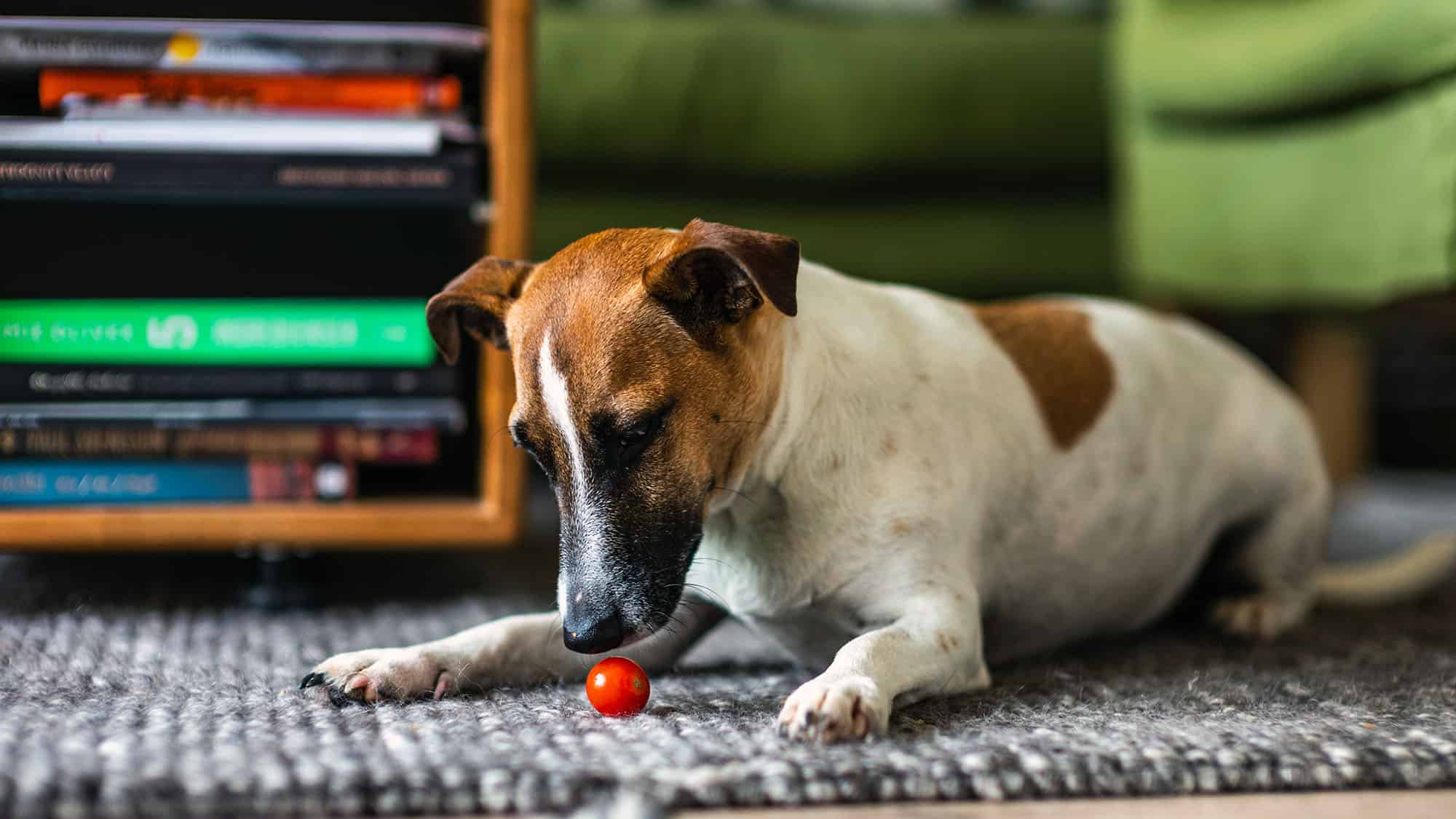 How A Dog Can Help You Through Home Isolation - 1