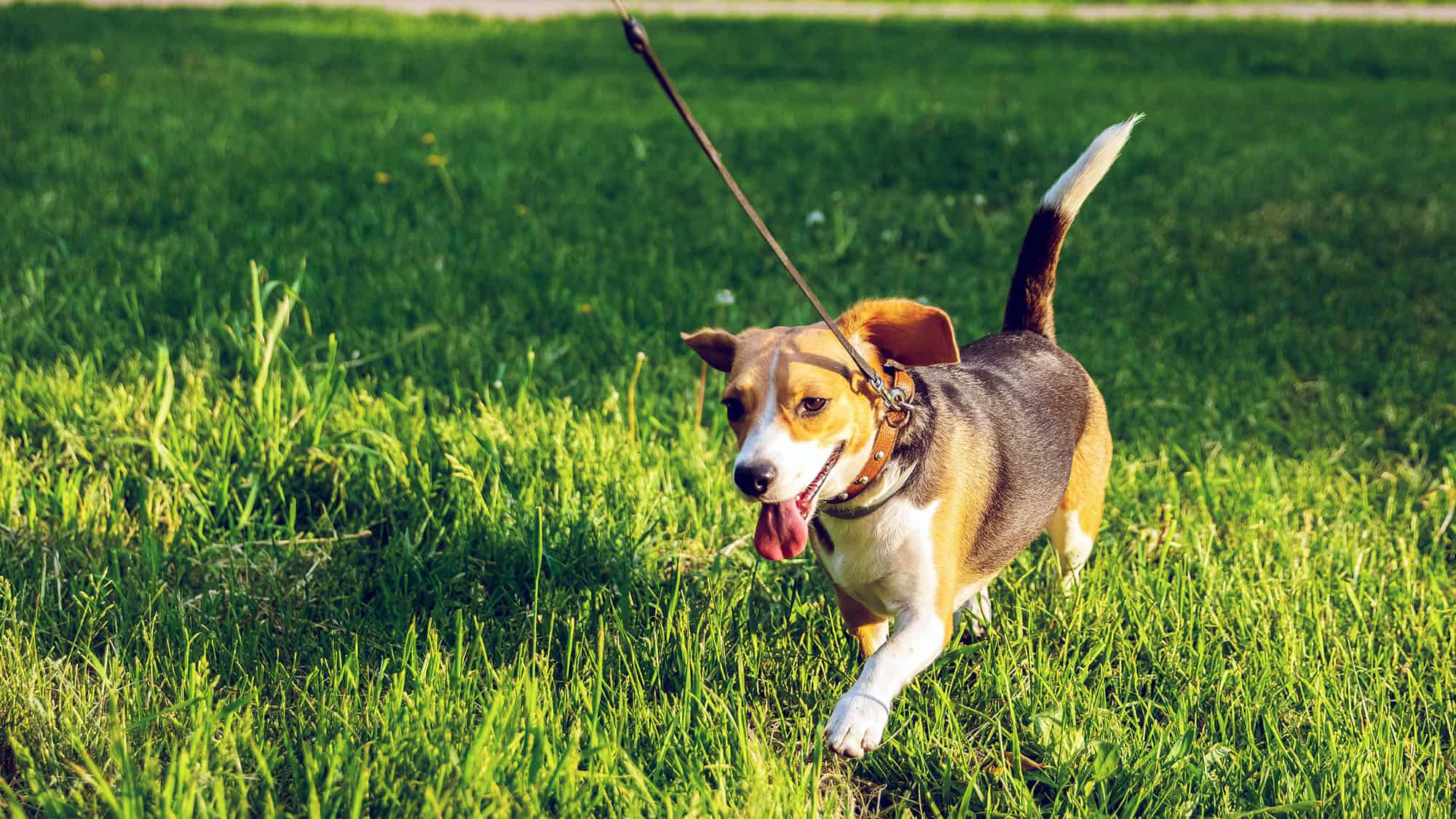 How To Retrieve A Dog Off Leash - 1