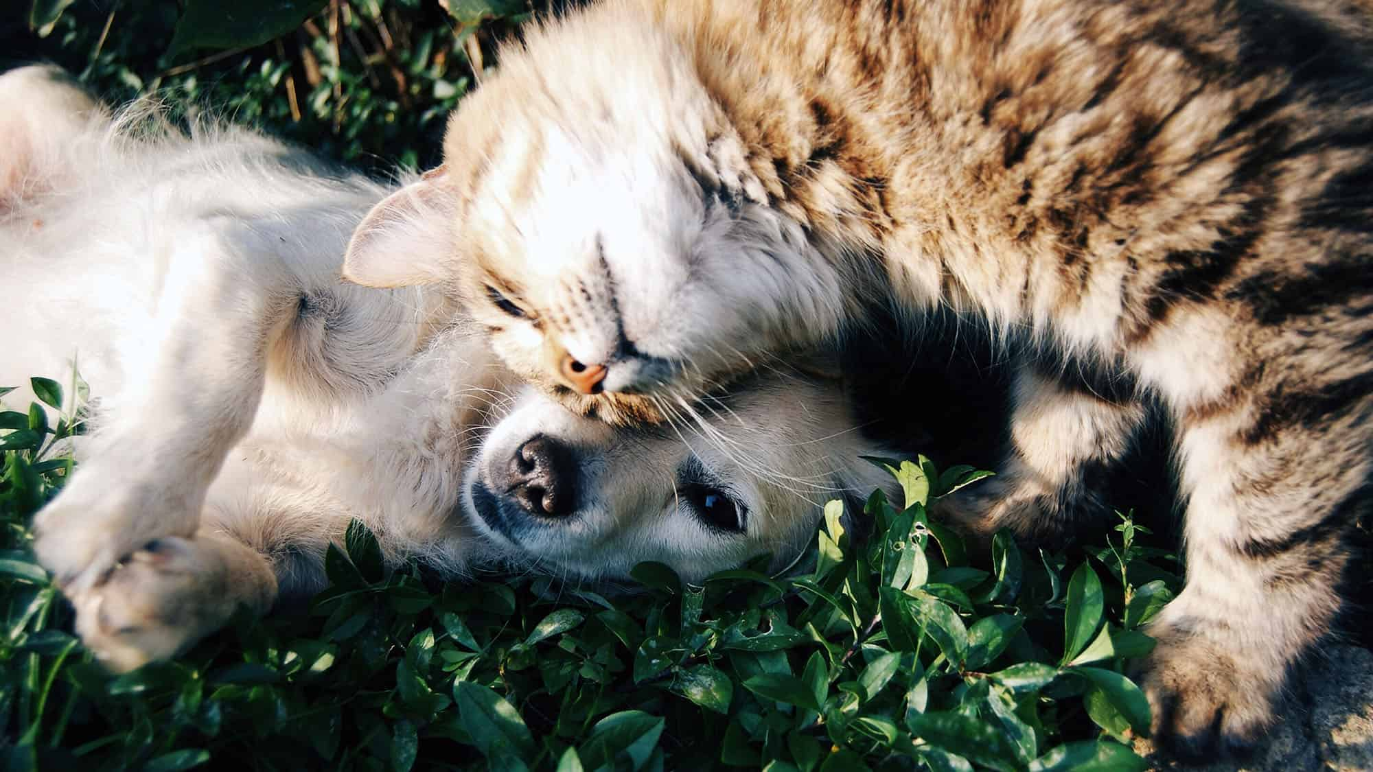 Why Do Dogs Eat Cat Poop - Feature