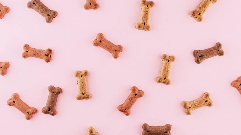 Homemade Dog Treats - Feature
