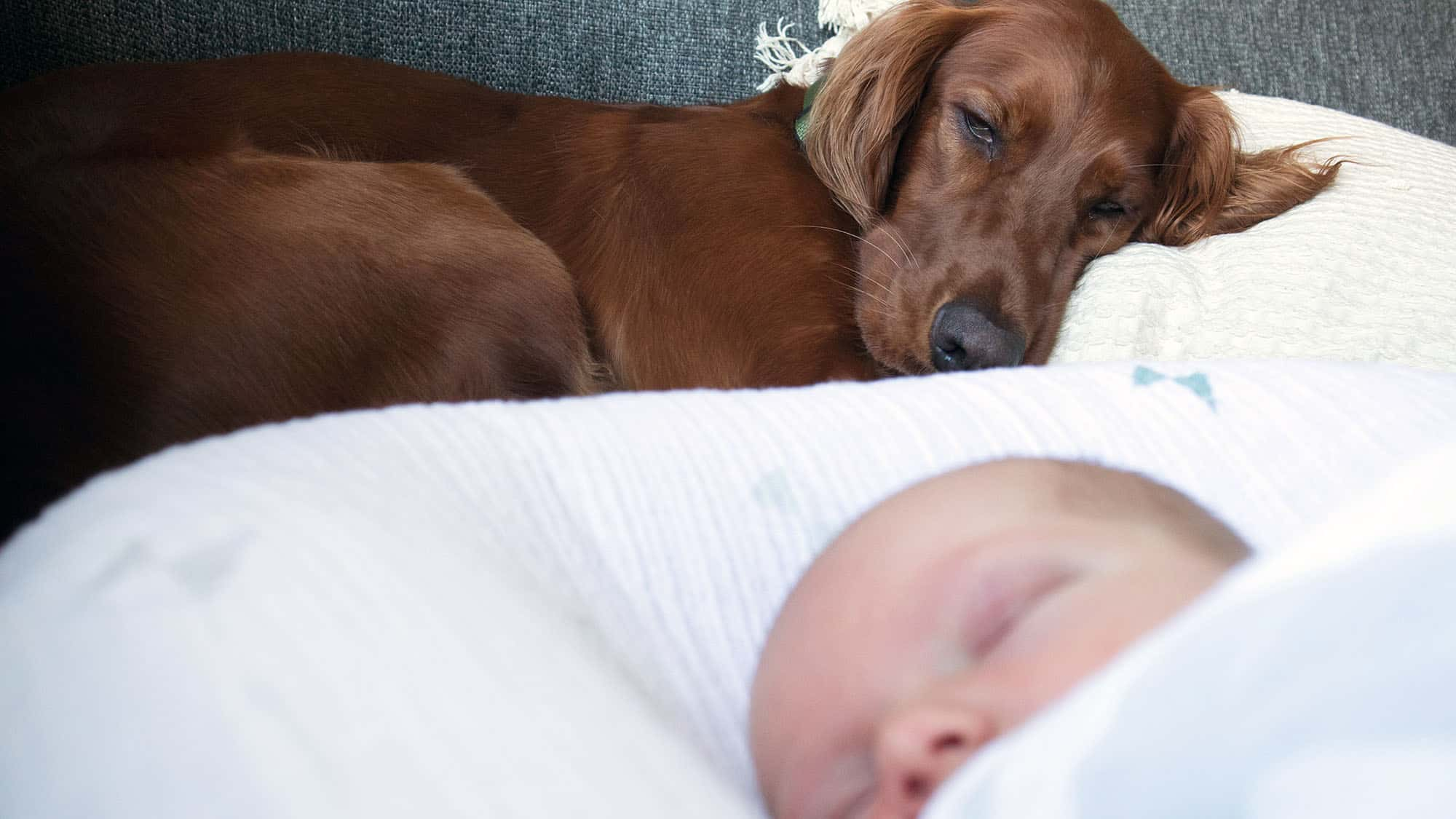 How To Introduce Dog To Baby - 3