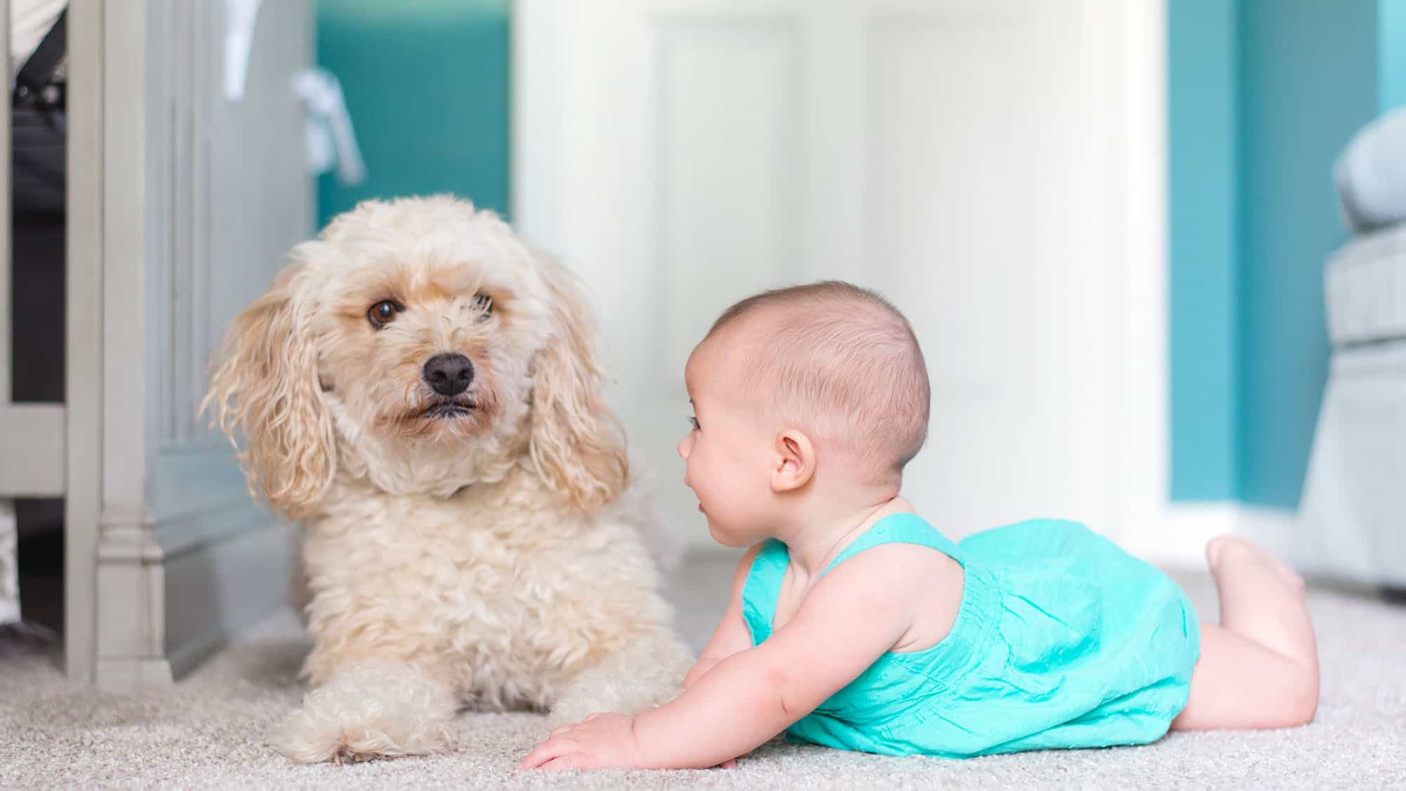 How To Introduce Dog To Baby - Feature