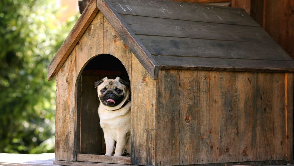3. Basic Dog House