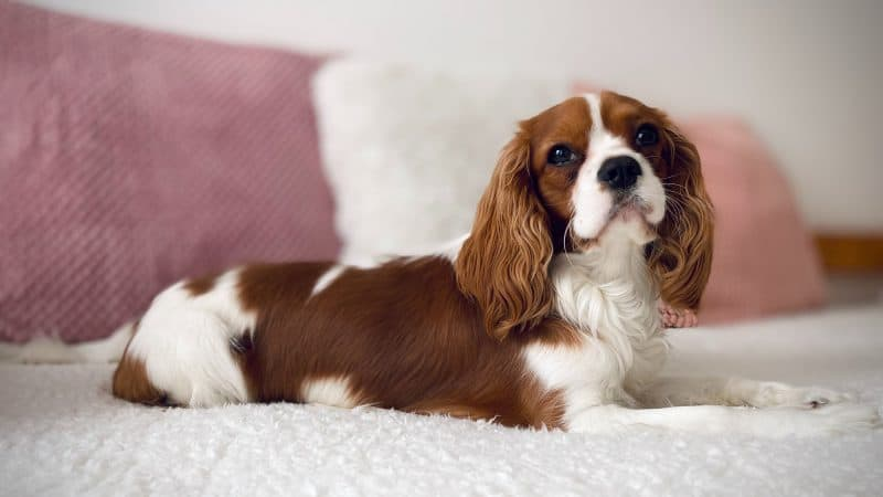 Benadryl For Dogs - Feature
