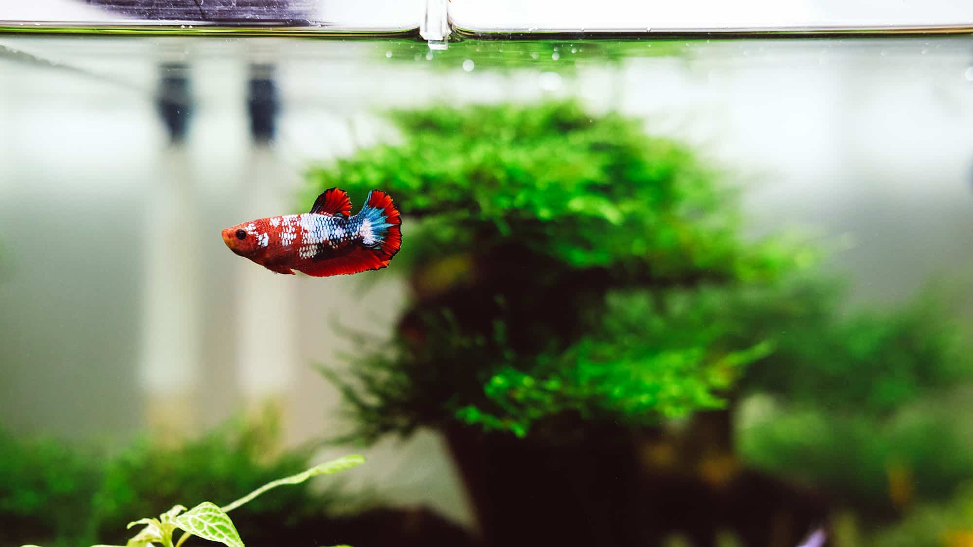 How to Keep Your Fish Tank Safe From Cats - Feature